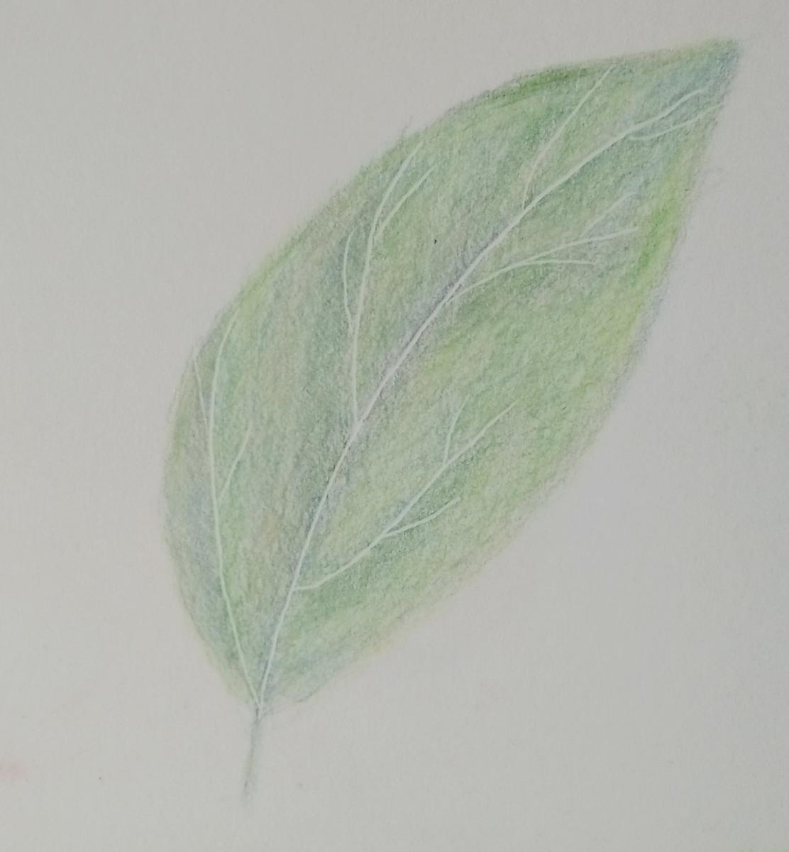 100- First Green Leaf