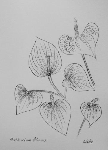 140 - Anthurium Bloosoms crop