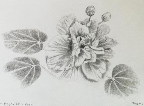 501- Awana Begonia