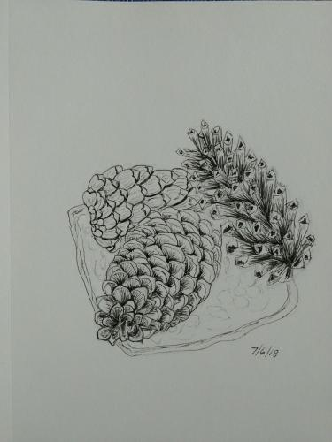 210- 3 pinecones snapseed