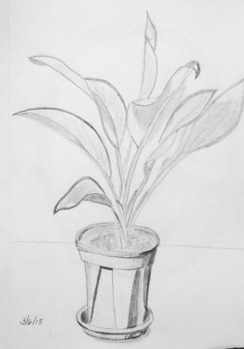 290- Bright house plant
