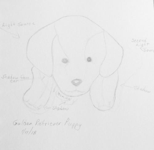 131-Golden Retriever Puppy