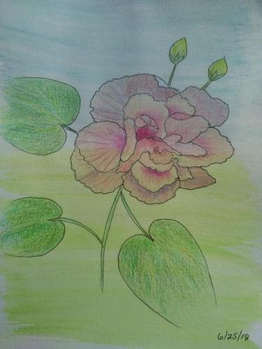 110- Pink Begonia