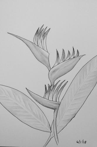 460- Bird of Paradise