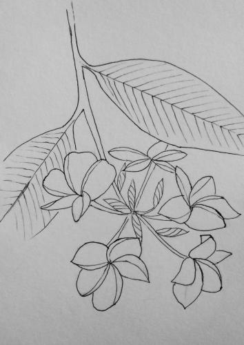 260- Ink frangipani