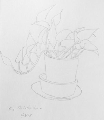 141-Philodendron Sketch